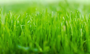 Lawn Service in Easton PA Lawn Care in Easton PA Lawn Mowing in Easton PA Lawn Professionals in Easton PA