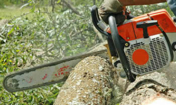 Tree Removal in Easton PA Tree Removal Quotes in Easton PA Tree Removal Estimates in Easton PA Tree Removal Services in Easton PA Tree Removal Professionals in Easton PA Tree Services in Easton PA