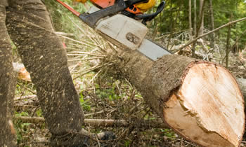 Tree Service in Easton PA Tree Service Estimates in Easton PA Tree Service Quotes in Easton PA Tree Service Professionals in Easton PA