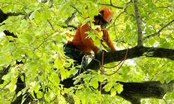 Tree Trimming in Easton PA Tree Trimming Services in Easton PA Tree Trimming Professionals in Easton PA Tree Services in Easton PA Tree Trimming Estimates in Easton PA Tree Trimming Quotes in Easton PA