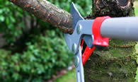 Tree Pruning Services in Easton PA