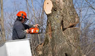 Tree Removal in Easton PA
